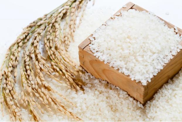 Kiểm nghiệm gạo để đảm bảo chất lượng